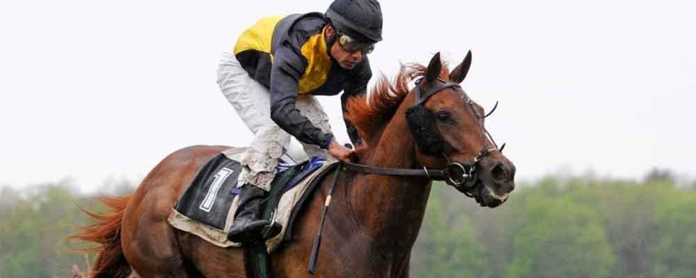 Clever tips betting horses criminal charges for aiding and abetting california